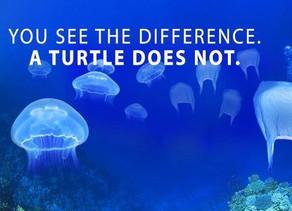 Plastic In Our Ocean