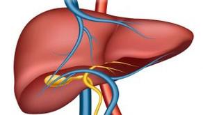 Fígado gorduroso: sintomas e tratamento
