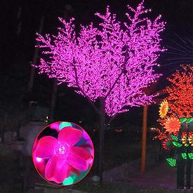 7m Cherry Tree.JPG