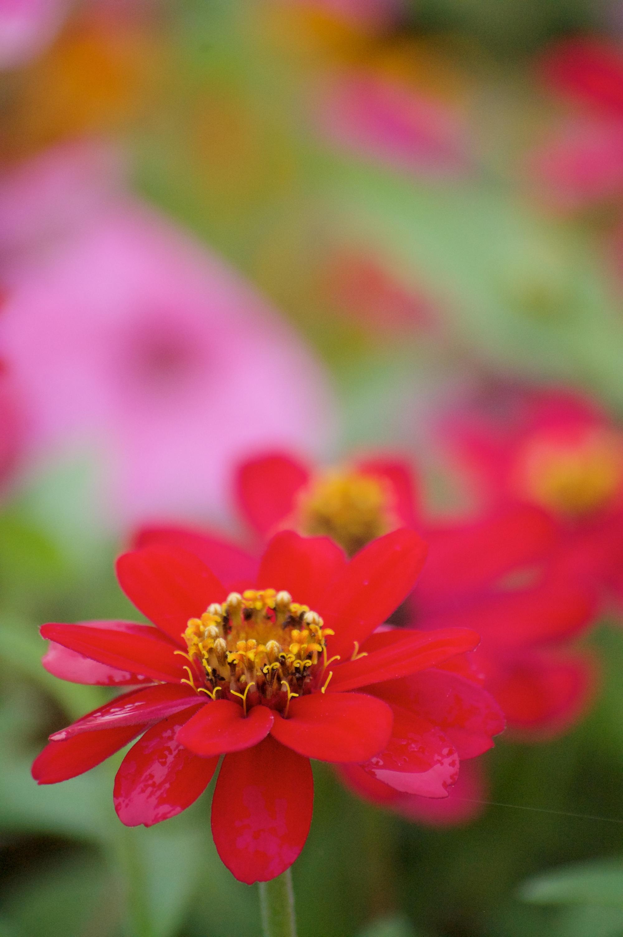 wildflowers of baddeck no.4