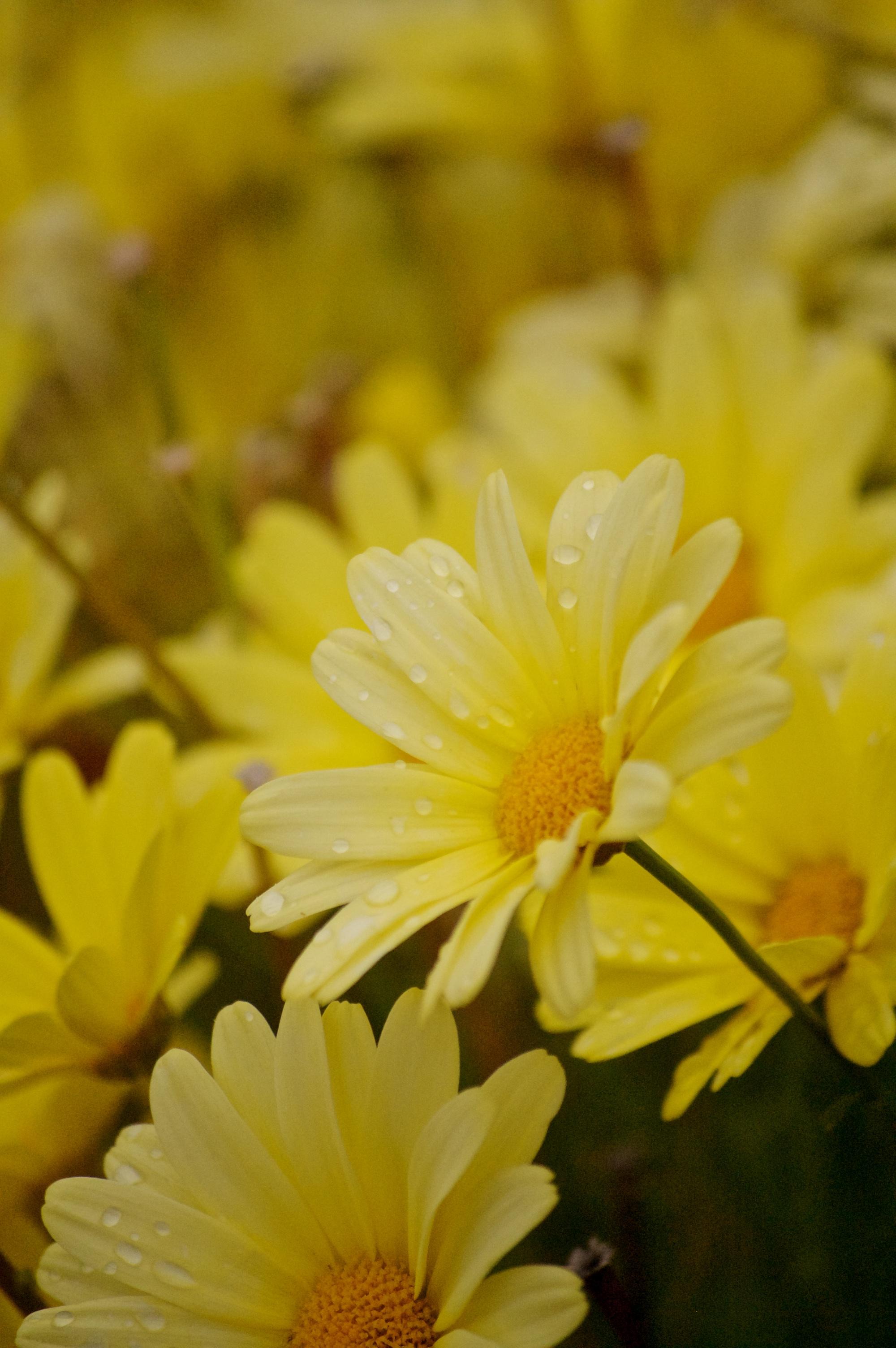 wildflowers of baddeck no.3