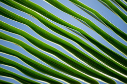 palm lines no.2