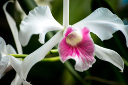 orchid expression no.2