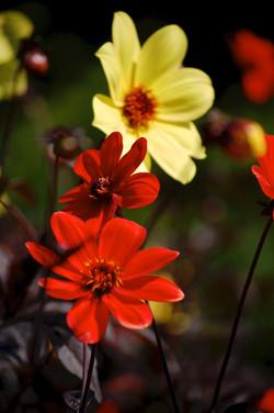 wildflowers in bloom no.6