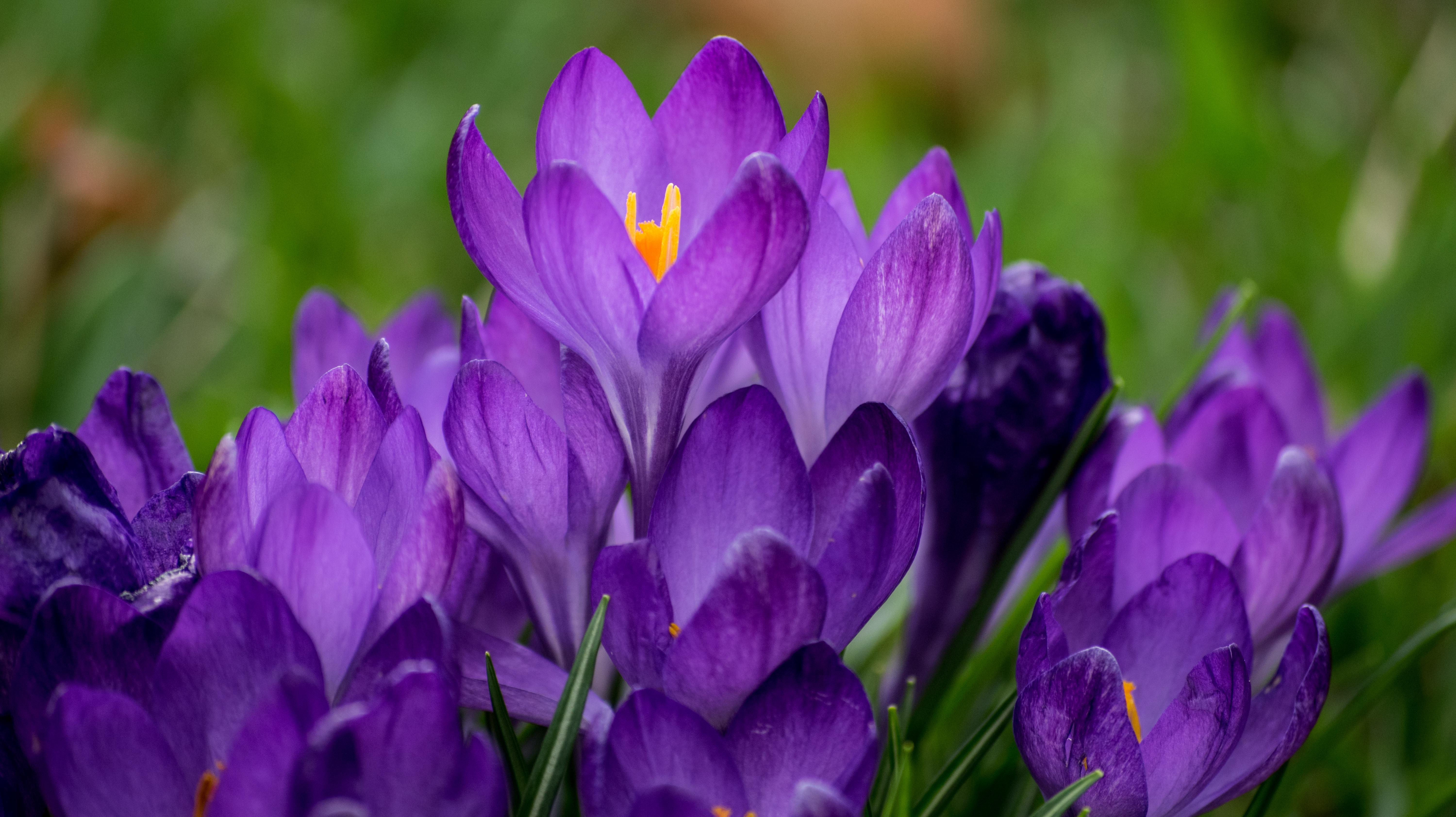 we travel in packs of purple