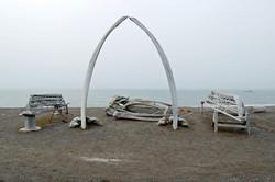whale born arch