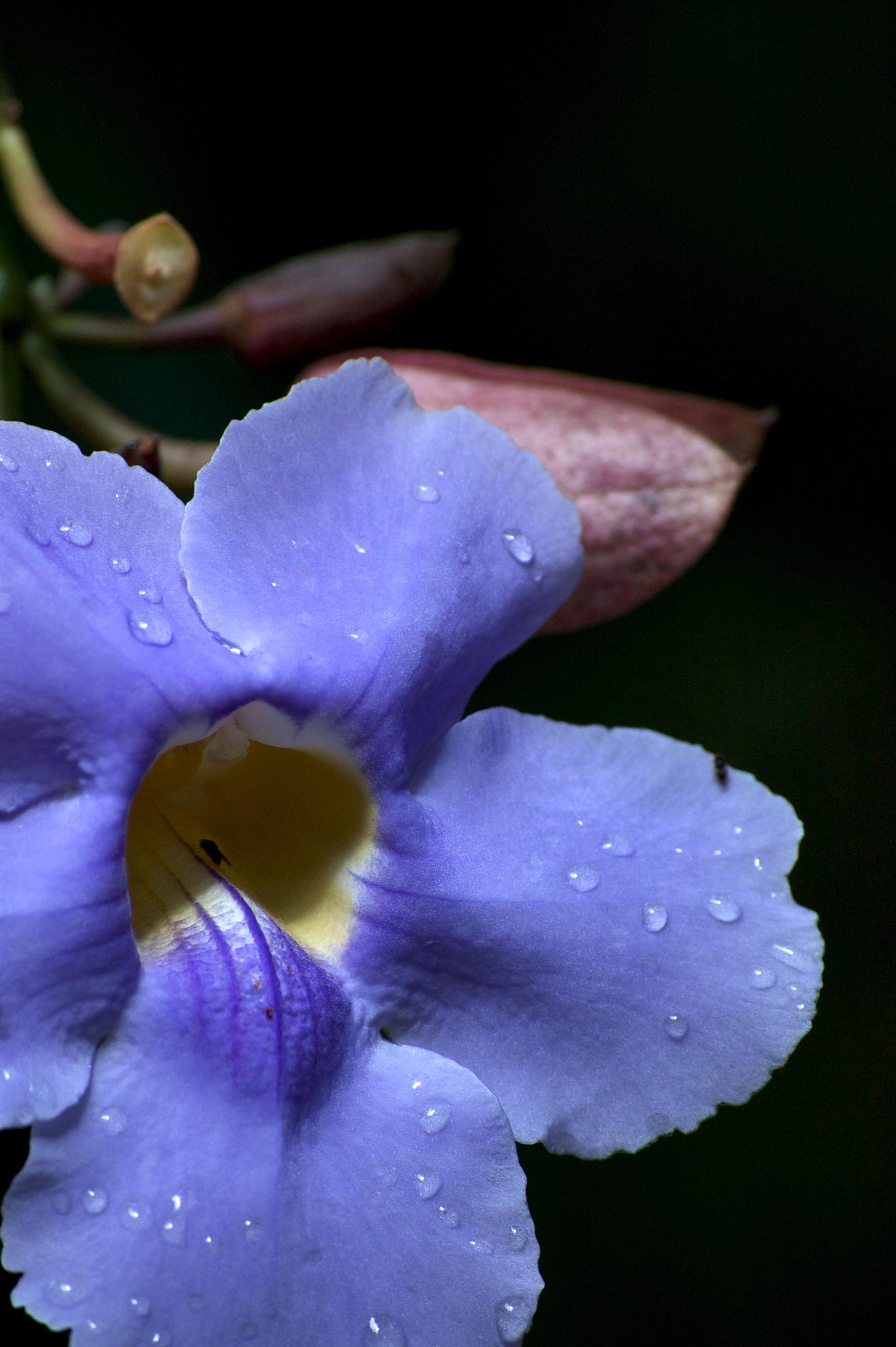 raindrops on a clock vine