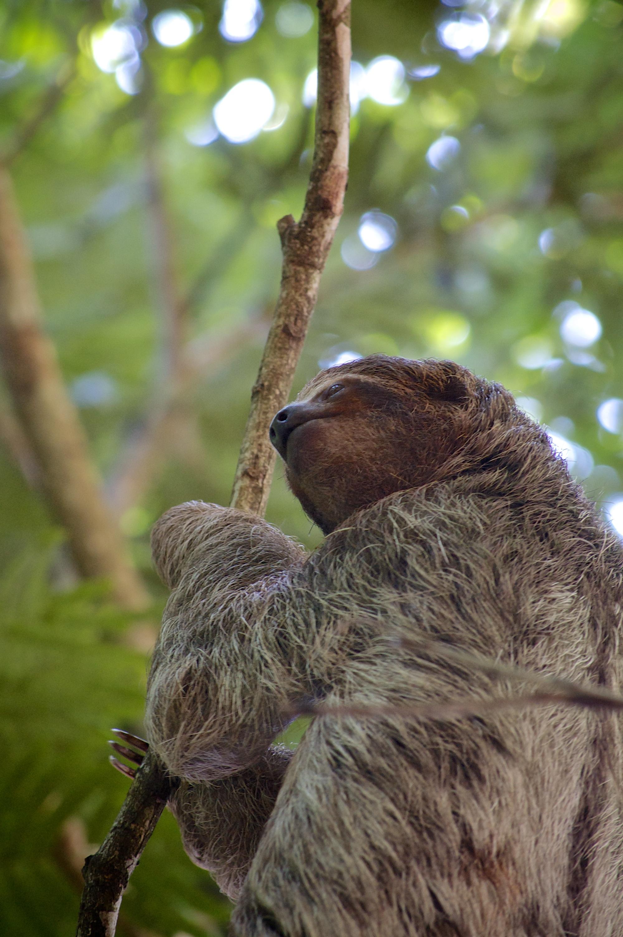 sloth no.2
