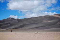 red brush dunes