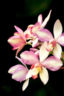 orchid expression no.4