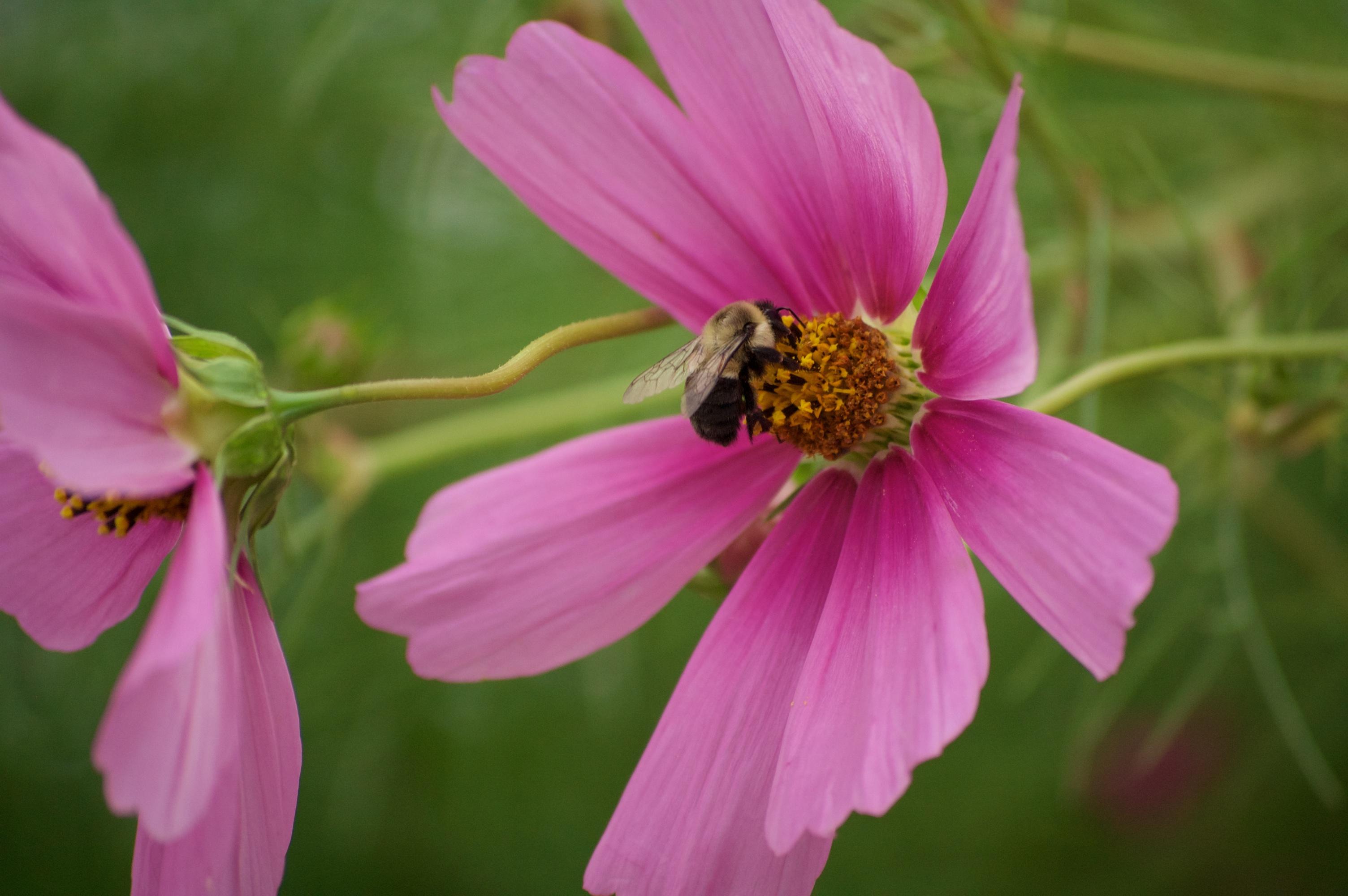 wildflowers of baddeck no.7
