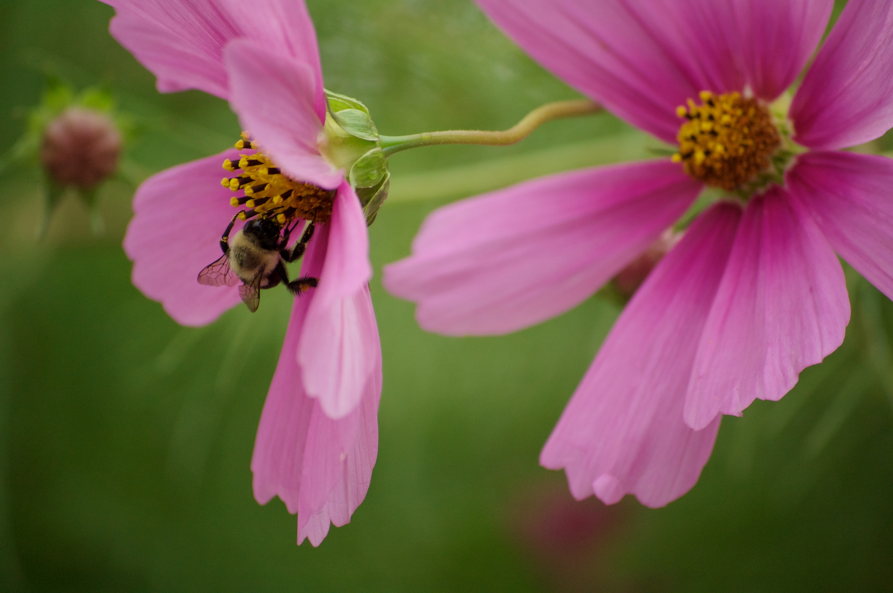 wildflowers of baddeck no.6