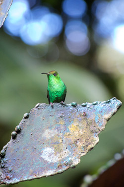 hummingbird hideaway no.2