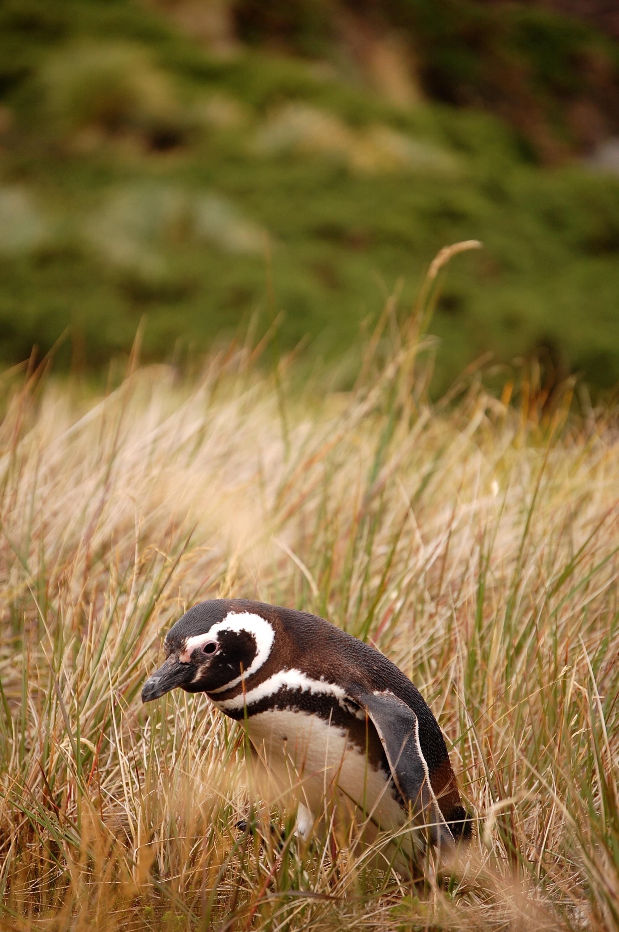 penguin crossing no.2
