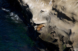 sea lion napping in the sun