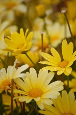 wildflowers of baddeck no.2