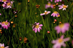 wildflowers in bloom no.9