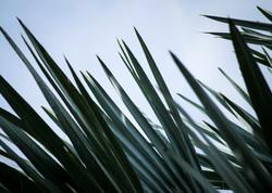 moody palm