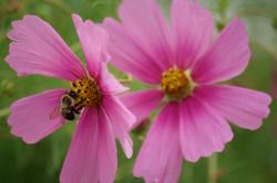 wildflowers of baddeck