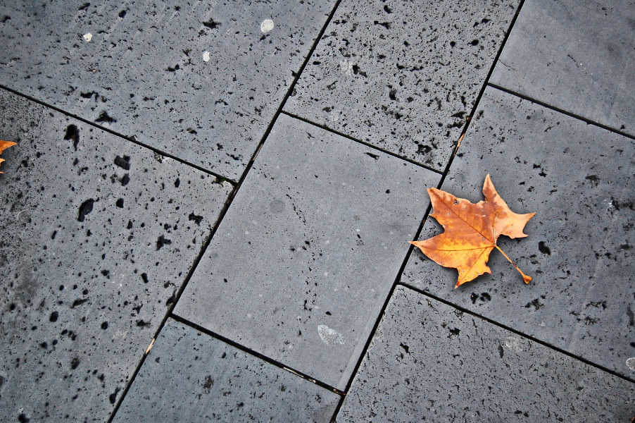 dead leaves on a dirty ground