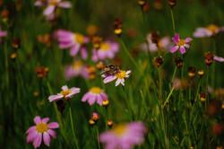 wildflowers in bloom no.10