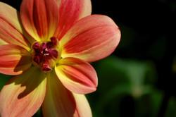 wildflowers in bloom no.5