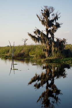 BLUE CYPRESS CONSERVATION AREA II