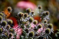 a spiky bunch