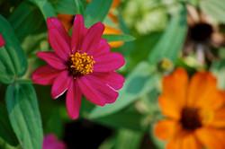 wildflowers in bloom no.11