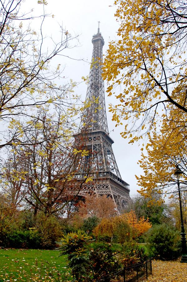 eiffel tower through the trees