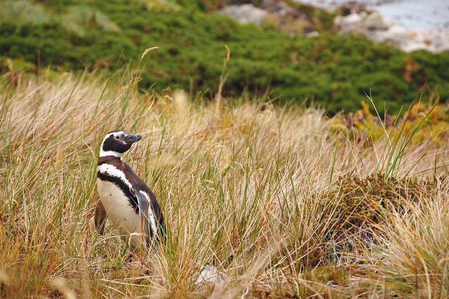 penguin crossing no.1