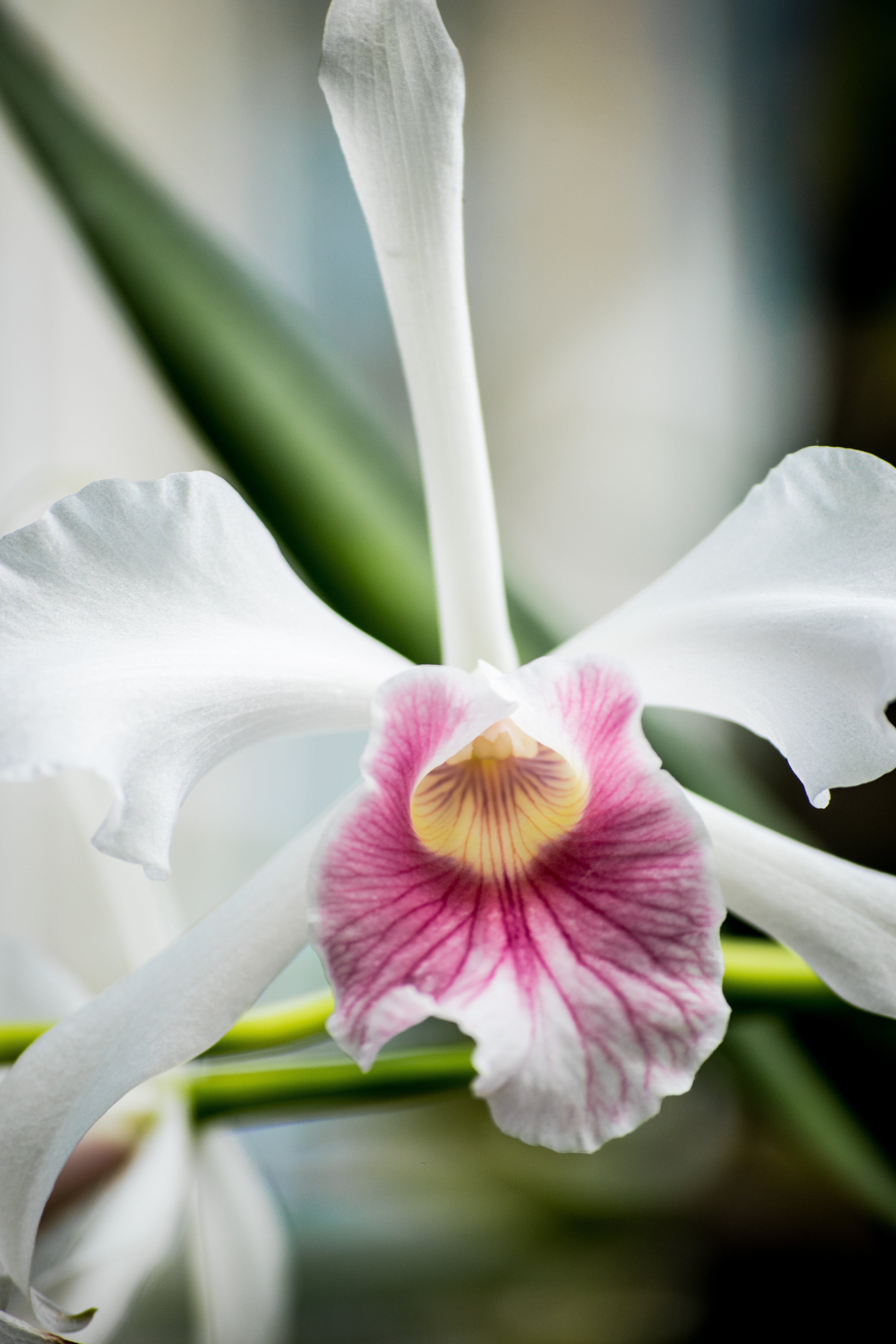 orchid expression no.1