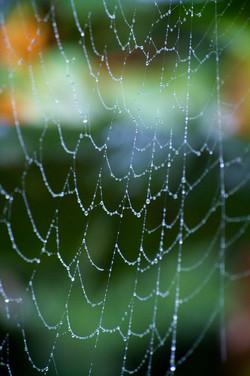 raindrops on a spiderweb no.1