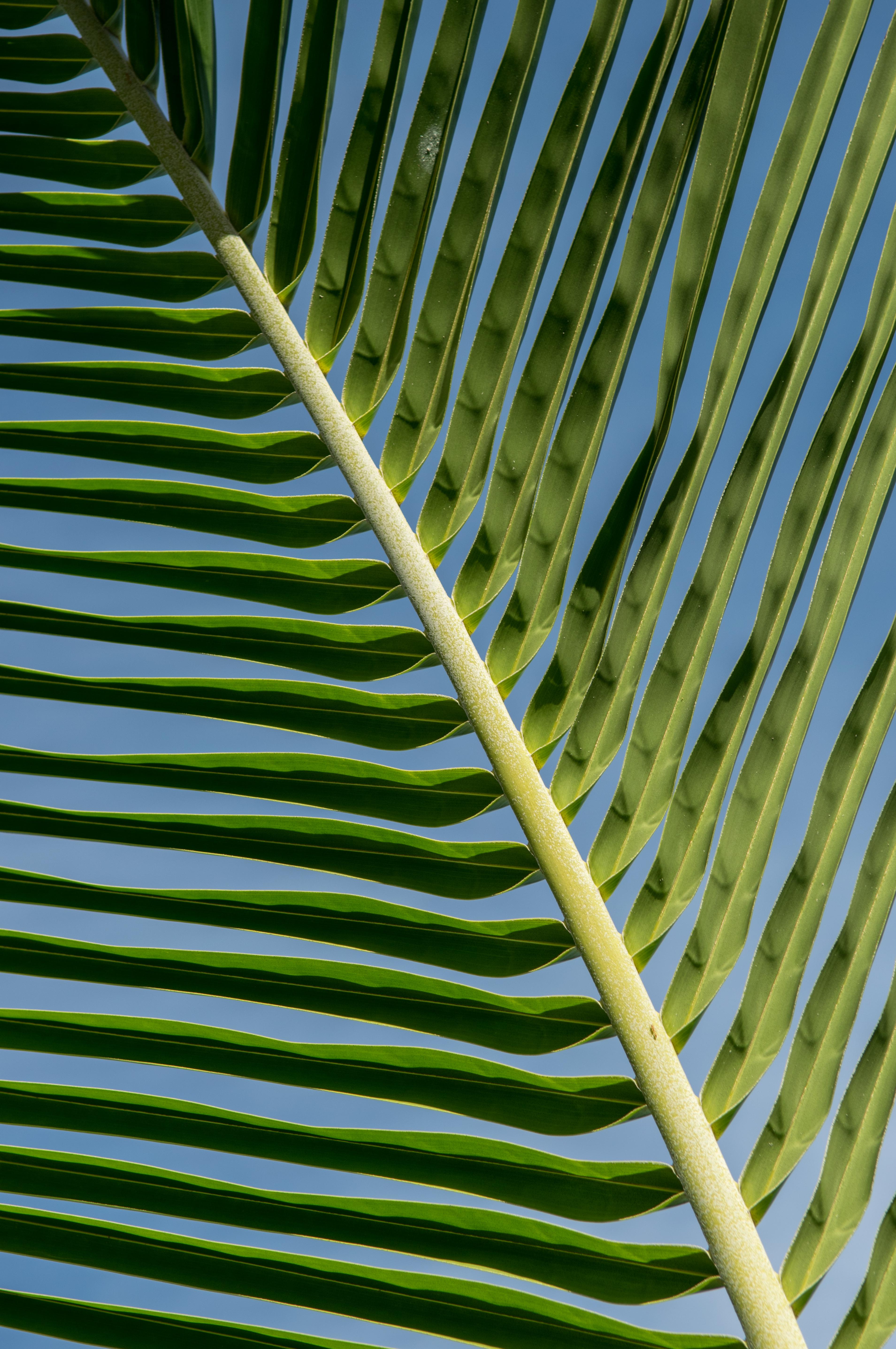 palm lines no.1