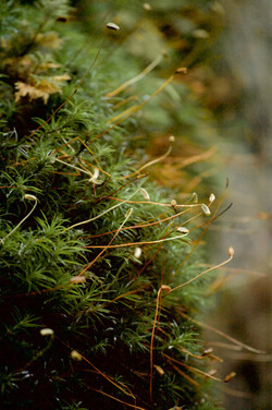 mossy growth