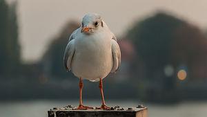 seagull-2880616_1920.jpg