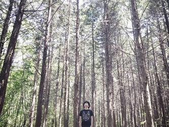 大きな木になるプロジェクト(仮)