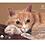 Thumbnail: Планшет для пастели А4 Теплые цвета 18 листов  6 цветов, 160 г/м2