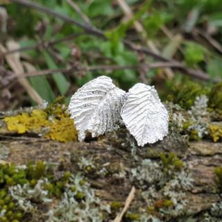 Silver hazelnut leaf earstuds 🌰_Mit die