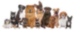 Group of twelve dogs sitting in front of