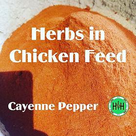 cayenne pepper.jpg