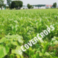 cover crops.png