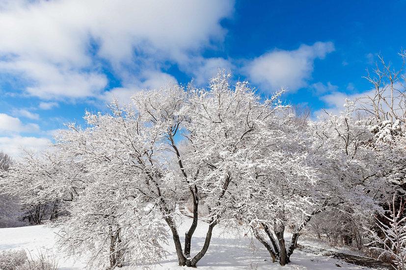 Spirit of Winter