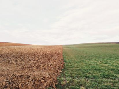 farmland-801817_1920.jpg