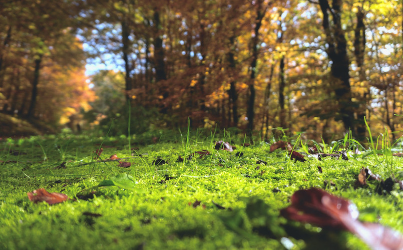 forest-floor-1031143_1920.jpg