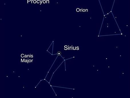 Levando as Estrelas Caninas para um Passeio de Primavera: Sírius e Procyon
