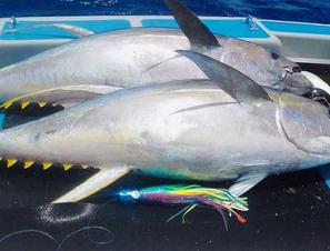 Yellow Fin Tuna.jpg