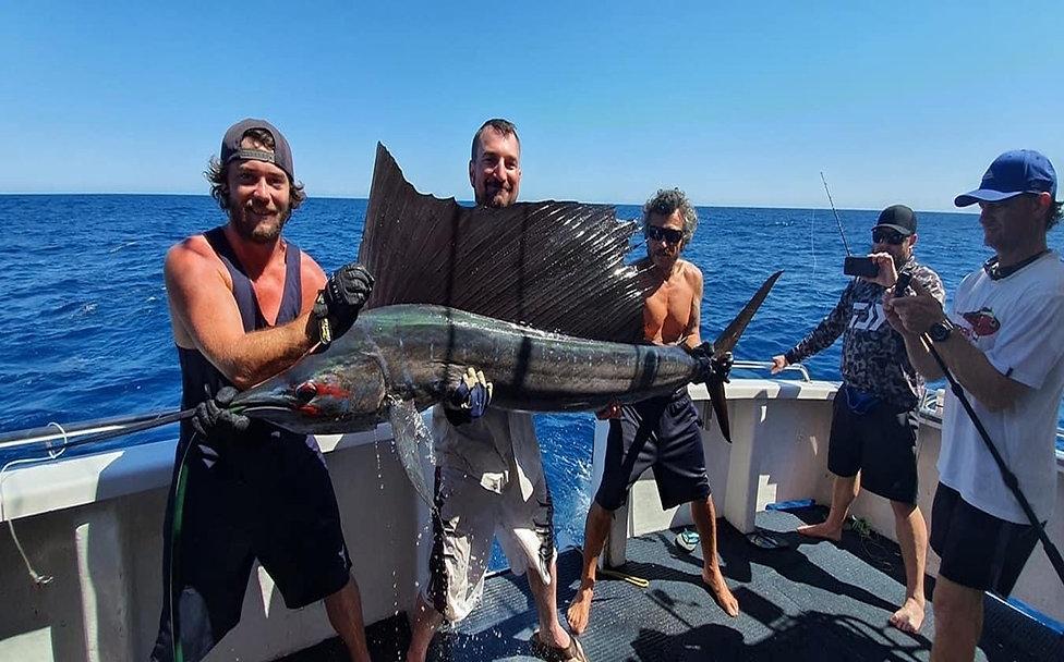 sailfish hydra 11.jpg