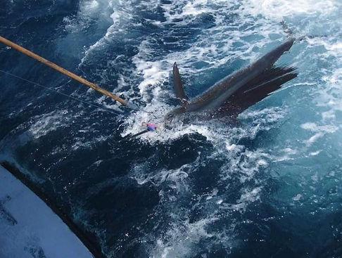 hydra 11 sail release.jpg