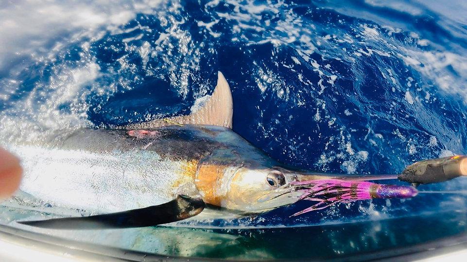 Barrel Bullet Marlin.jpg